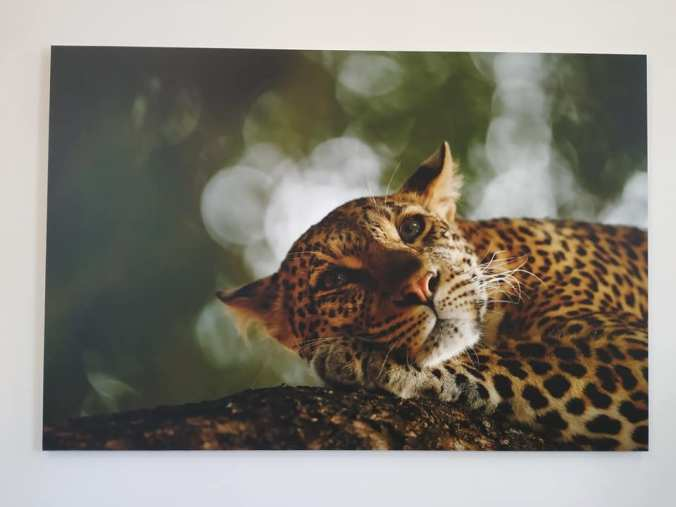 Day 27 - Jaguar at Treasure House Beverley